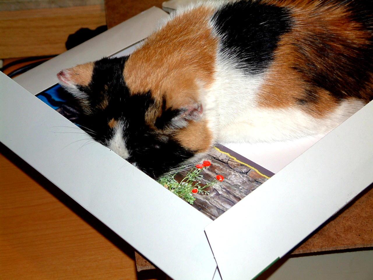Wo Katzen überall ihre Nase drin haben müssen.... tztztzt