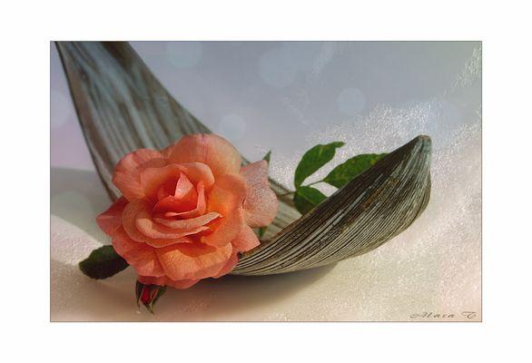 Wo Rosen sich im Traume wiegen ...