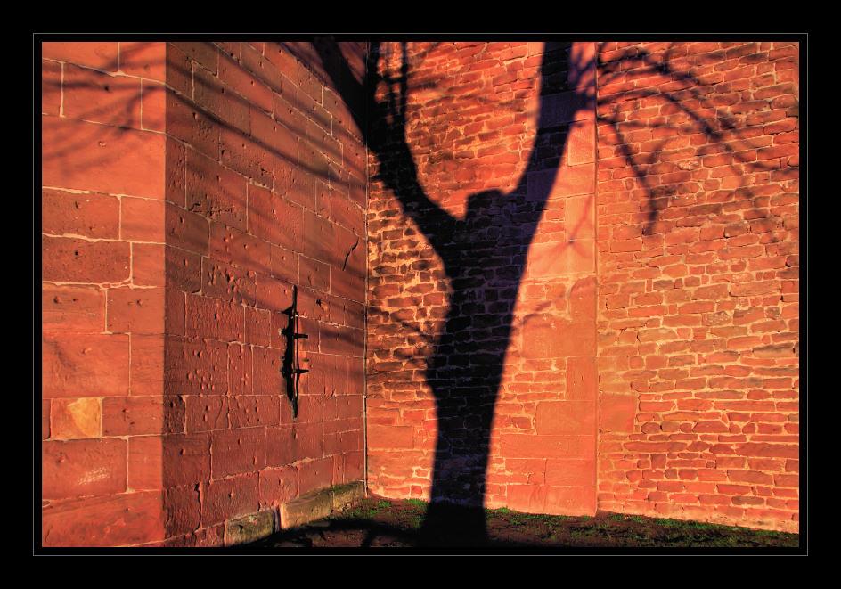 Wo Schatten ist, da gibt es auch Licht