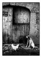 Wo sich Hund und Huhn gute Nacht sagen