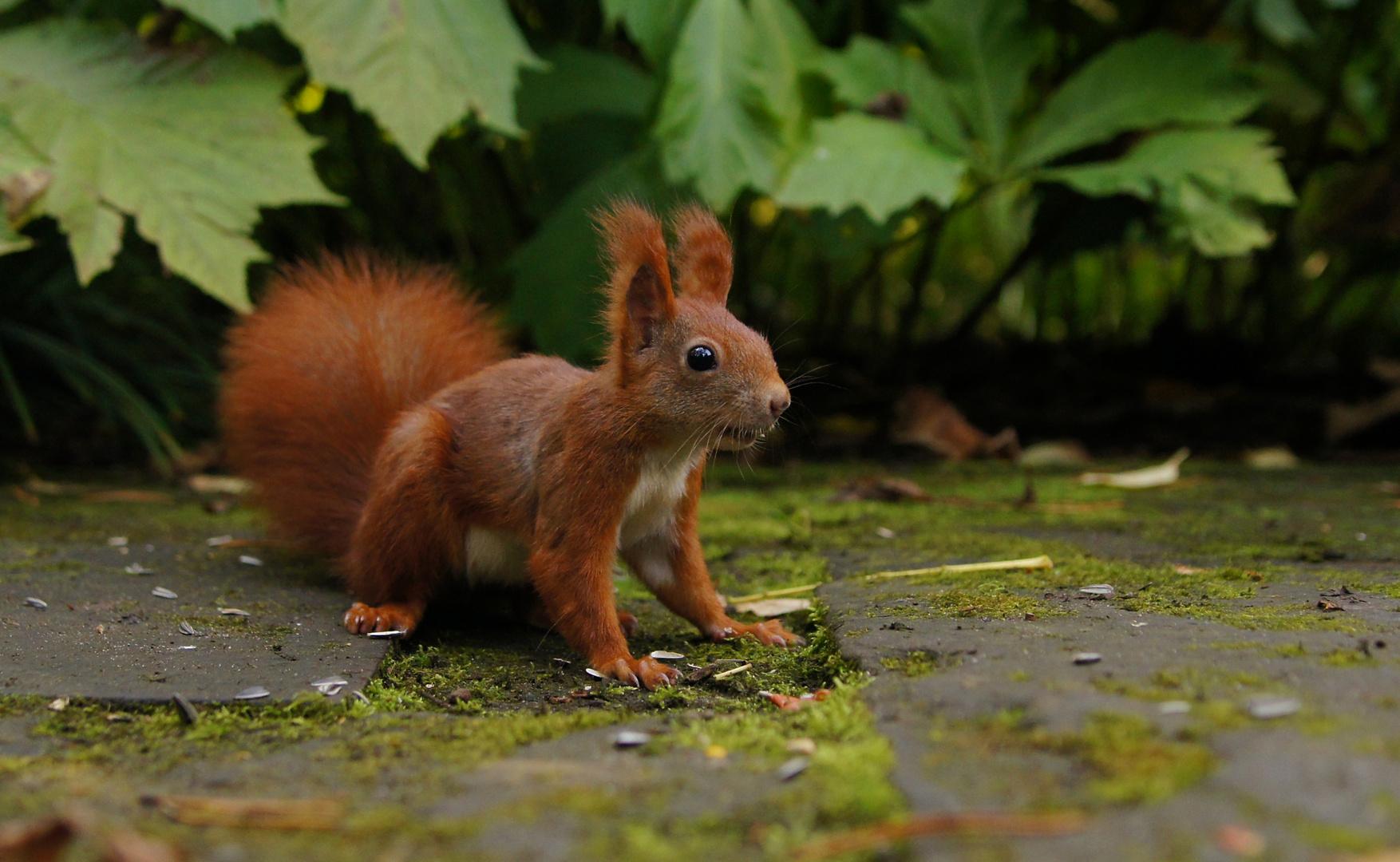 """""""Wo sind die Nüsse?"""" - siehe Fotokommentar von Alexander!"""