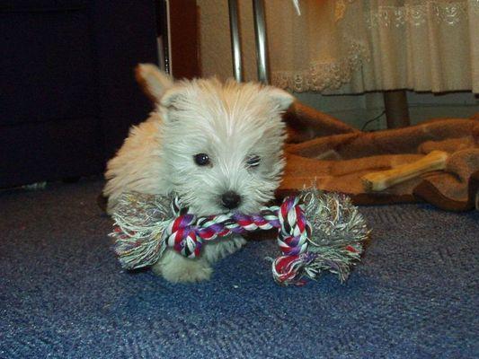 Wo will das Spielzeug mit dem Hund hin?