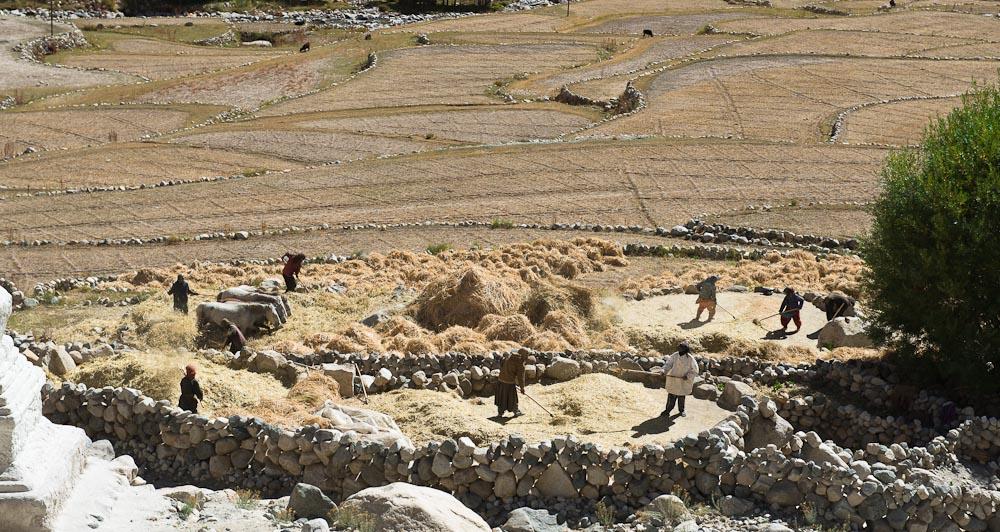 Woche 37: In allen Dörfern wird das Korn gedrescht