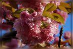 Wochenendblümchen