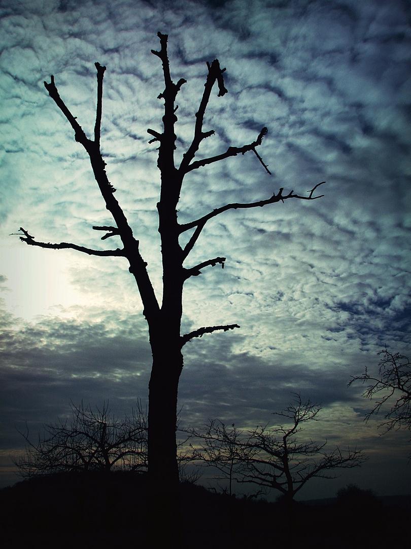 wodden sky