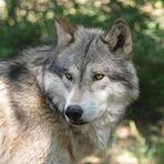 Wölfe und Forschung hautnah erleben (3)