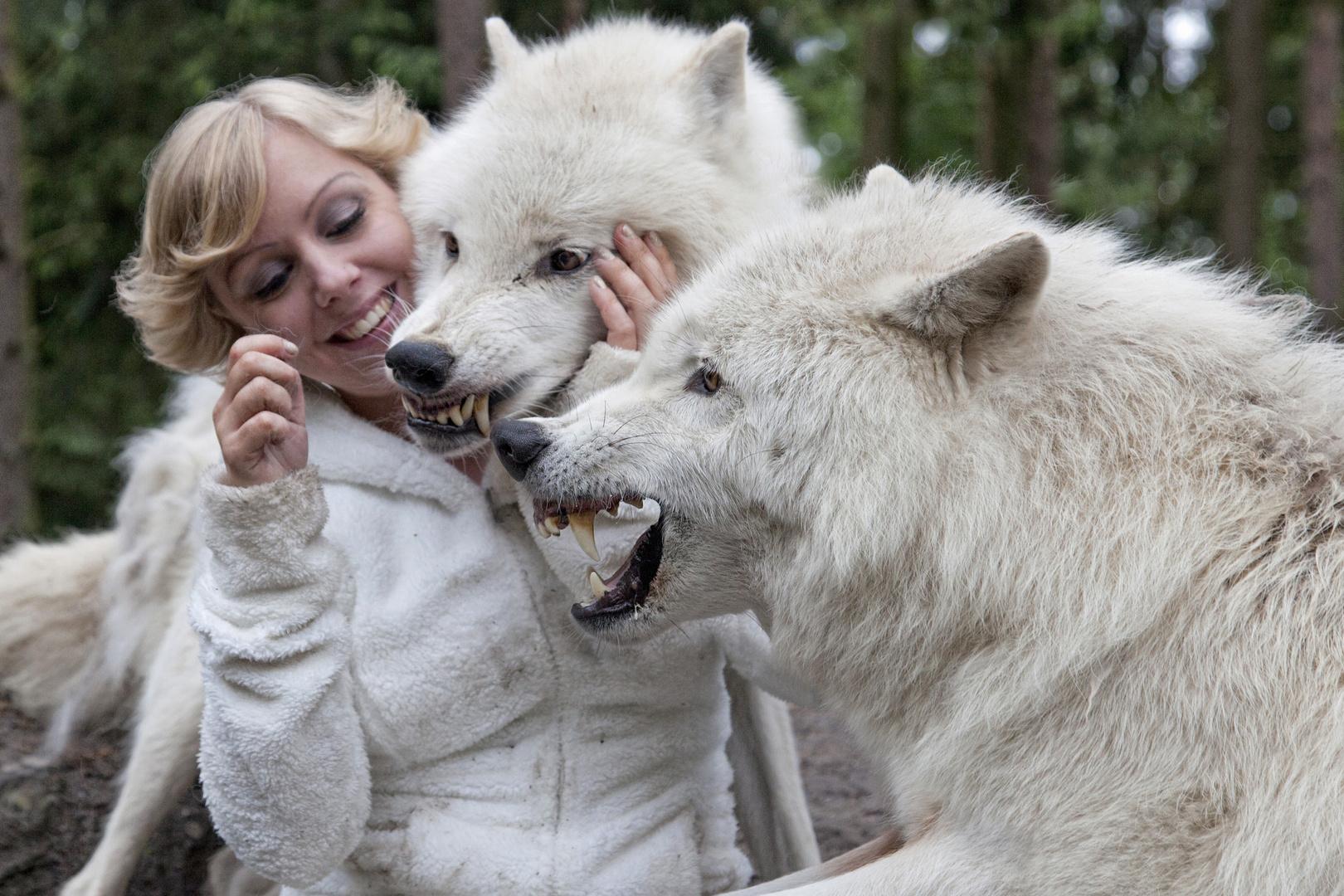 Wölfe Unter Sich