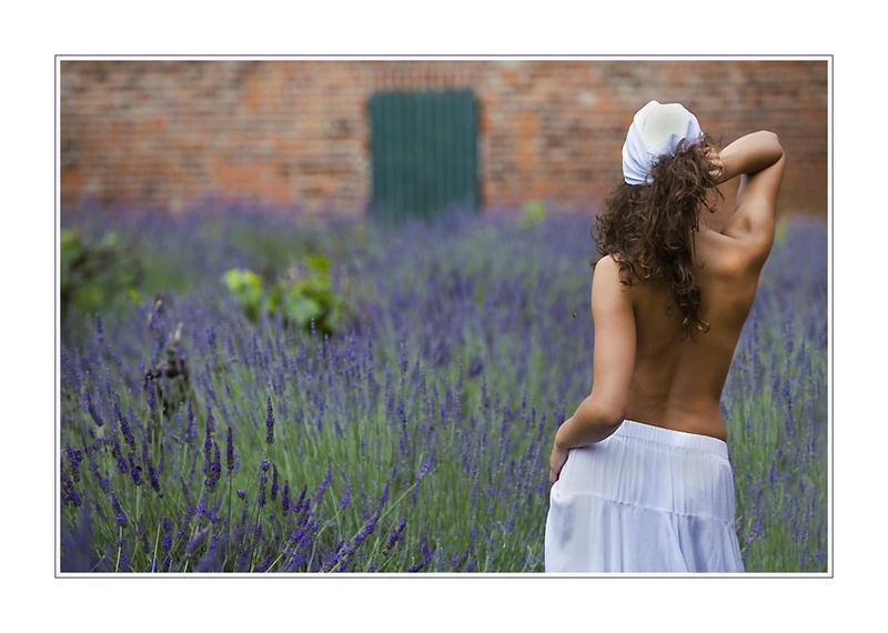 Wogendes Lavendelmeer