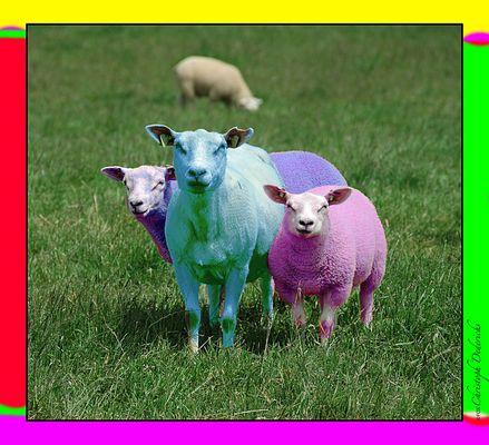 woher kommen die farbigen Wollpullover