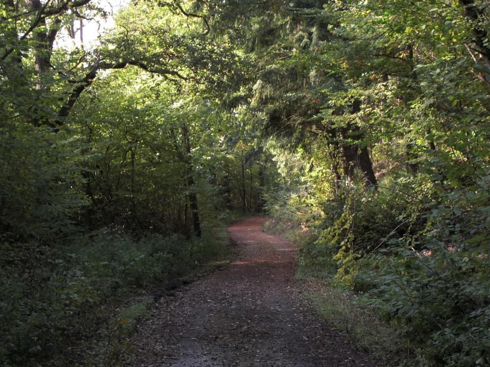 Wohin der Weg mich führt ......