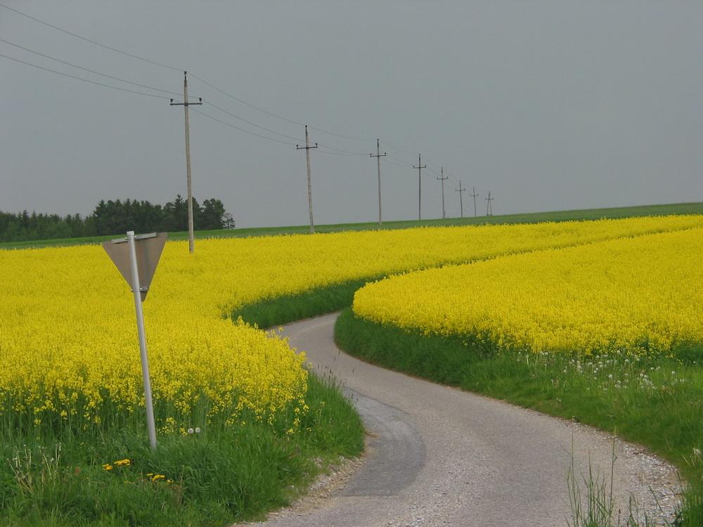 Wohin der Weg uns führt...