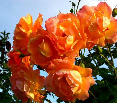 Wohl die letzten Blüten