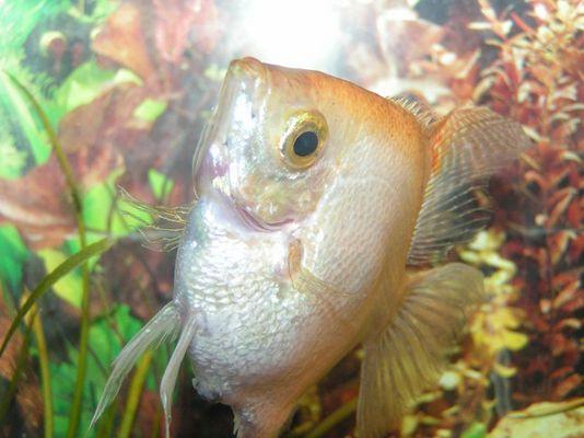 Wohlfühlen wie ein Fisch im Wasser
