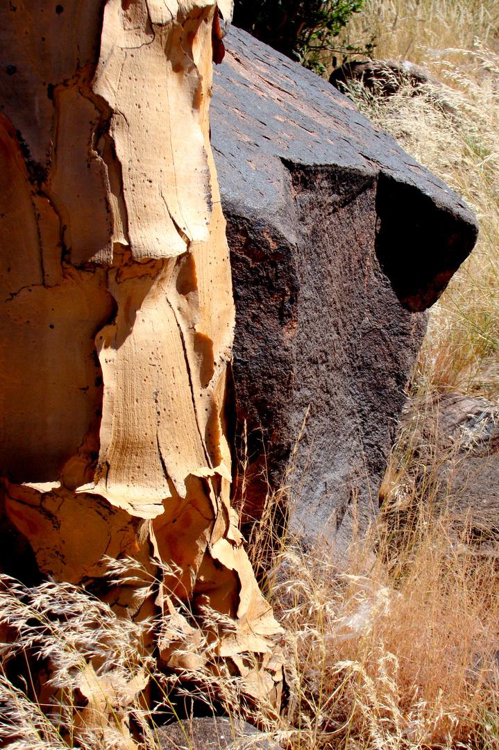 Wohngemeinschaft----Köcherbaum und Dolerit in Mesosaurusgebiet.