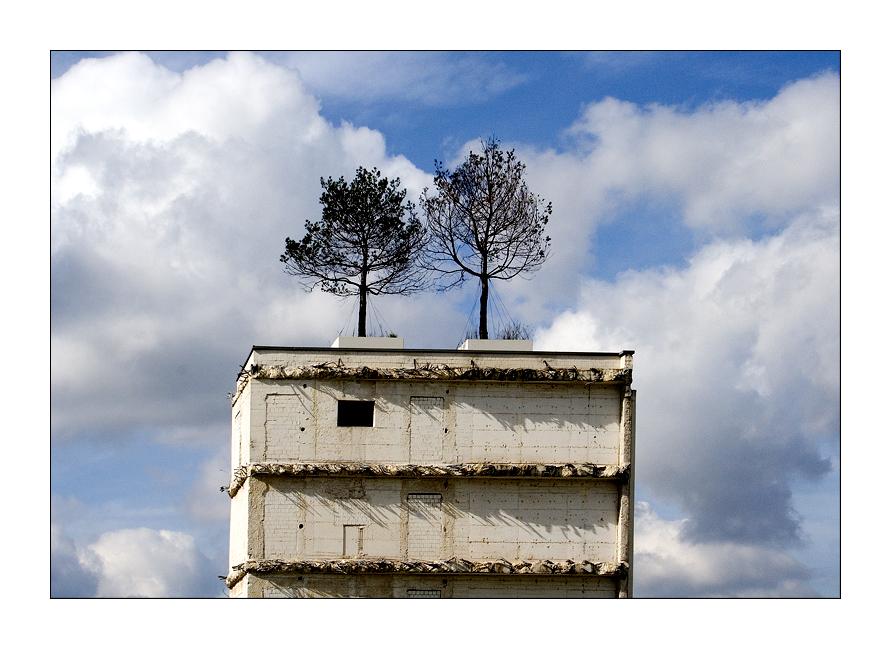 Wohnung mit Dachgarten zu vermieten