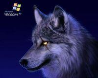 Wolf 1961