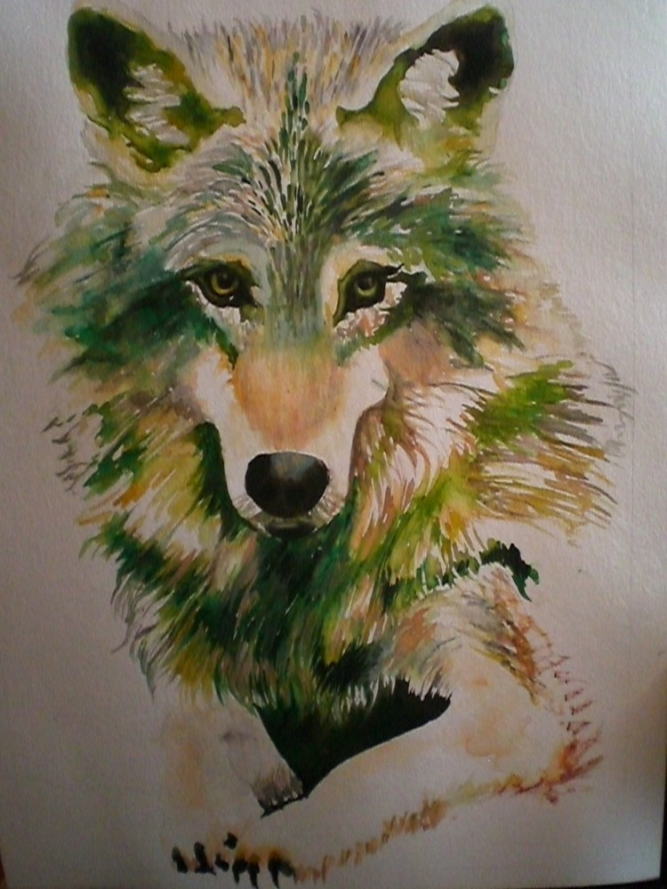wolf gemalt in aquarell foto bild tiere wildlife wildlife sonstige tiere bilder auf. Black Bedroom Furniture Sets. Home Design Ideas