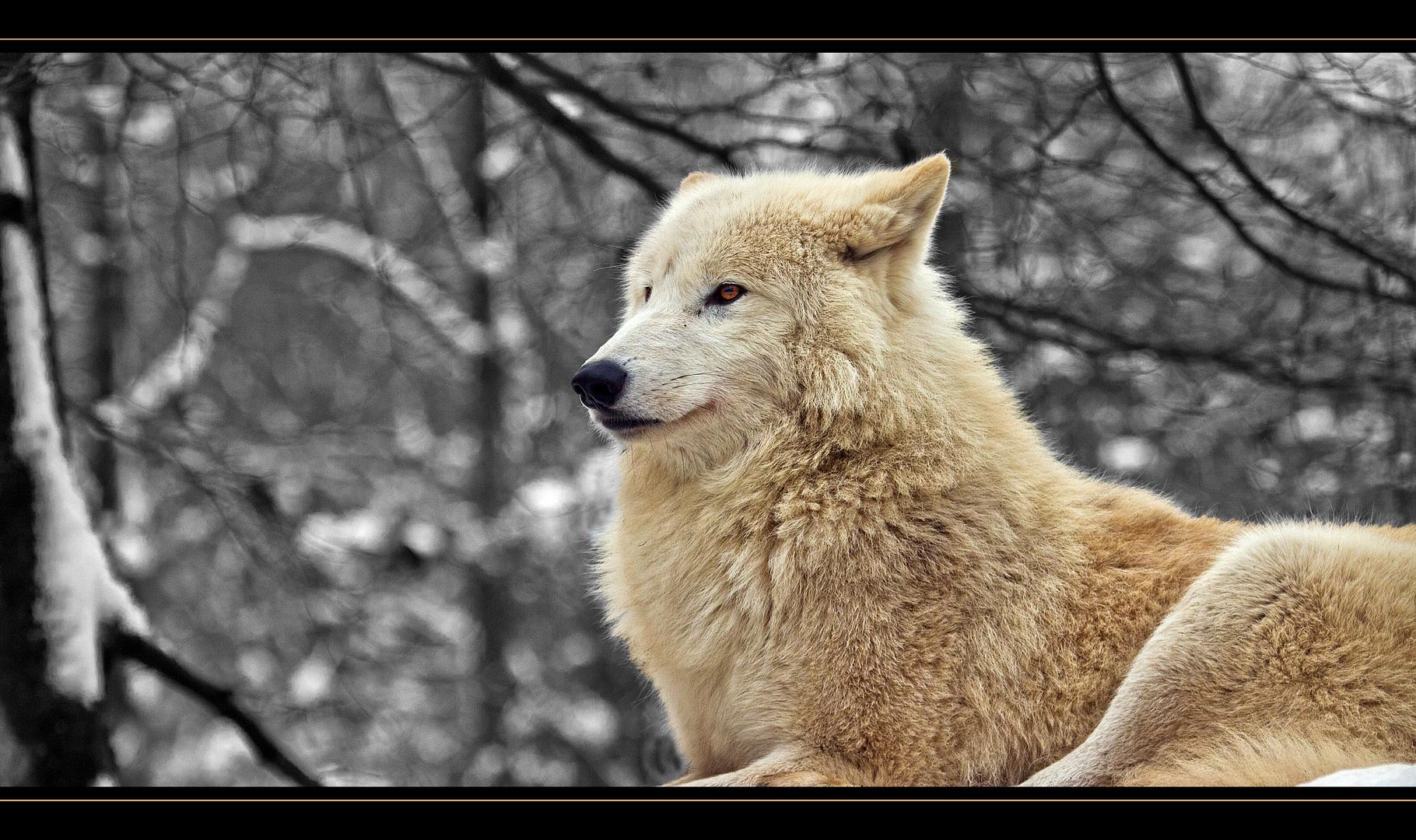 Wolf mal anders !