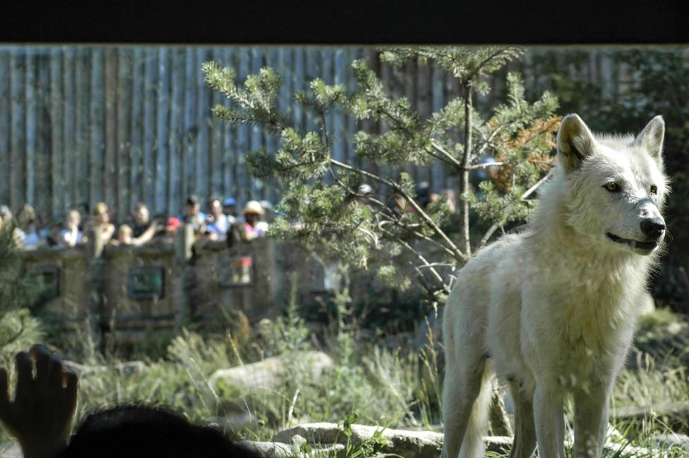 Wolf und Menschen