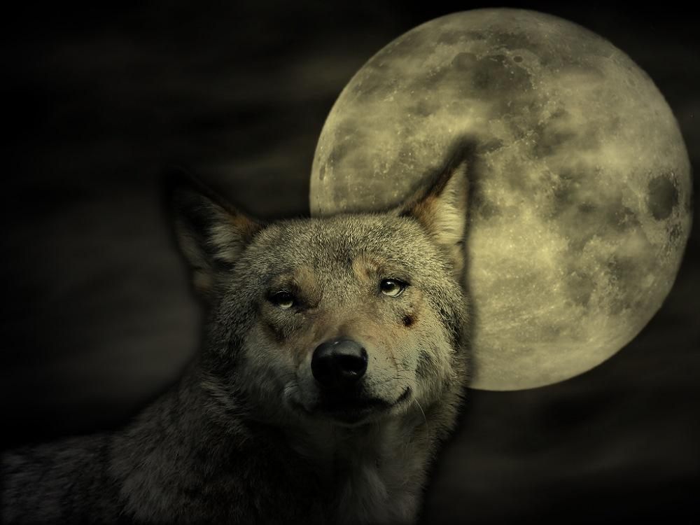 Wolfs-Nacht
