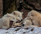 WOLFS REVIER