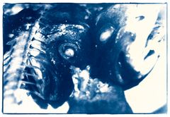 Wolfsbarsch Blau