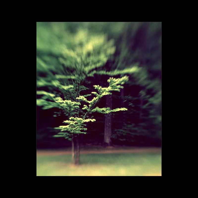 · Wolfsgarten #9 ·