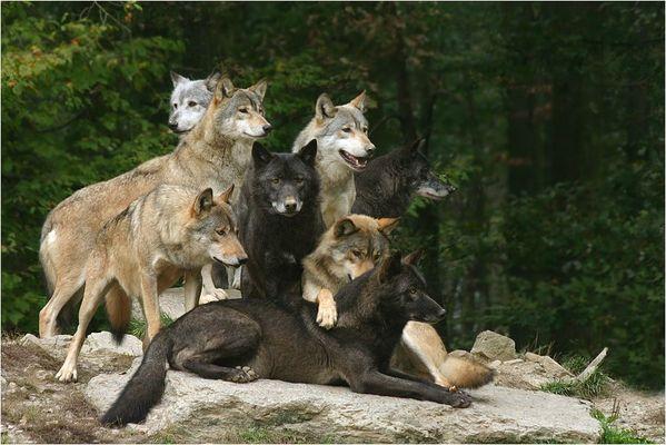 Wolfsidylle ...