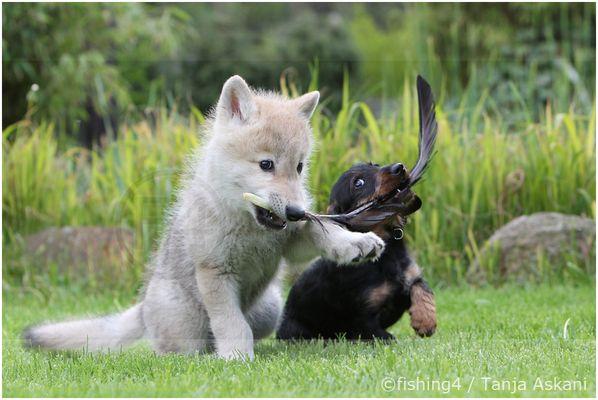 Wolfskind Naaja