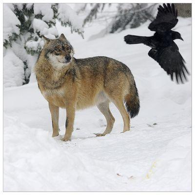 Wolfslegenden I