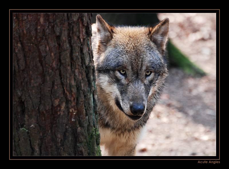 Wolfslist