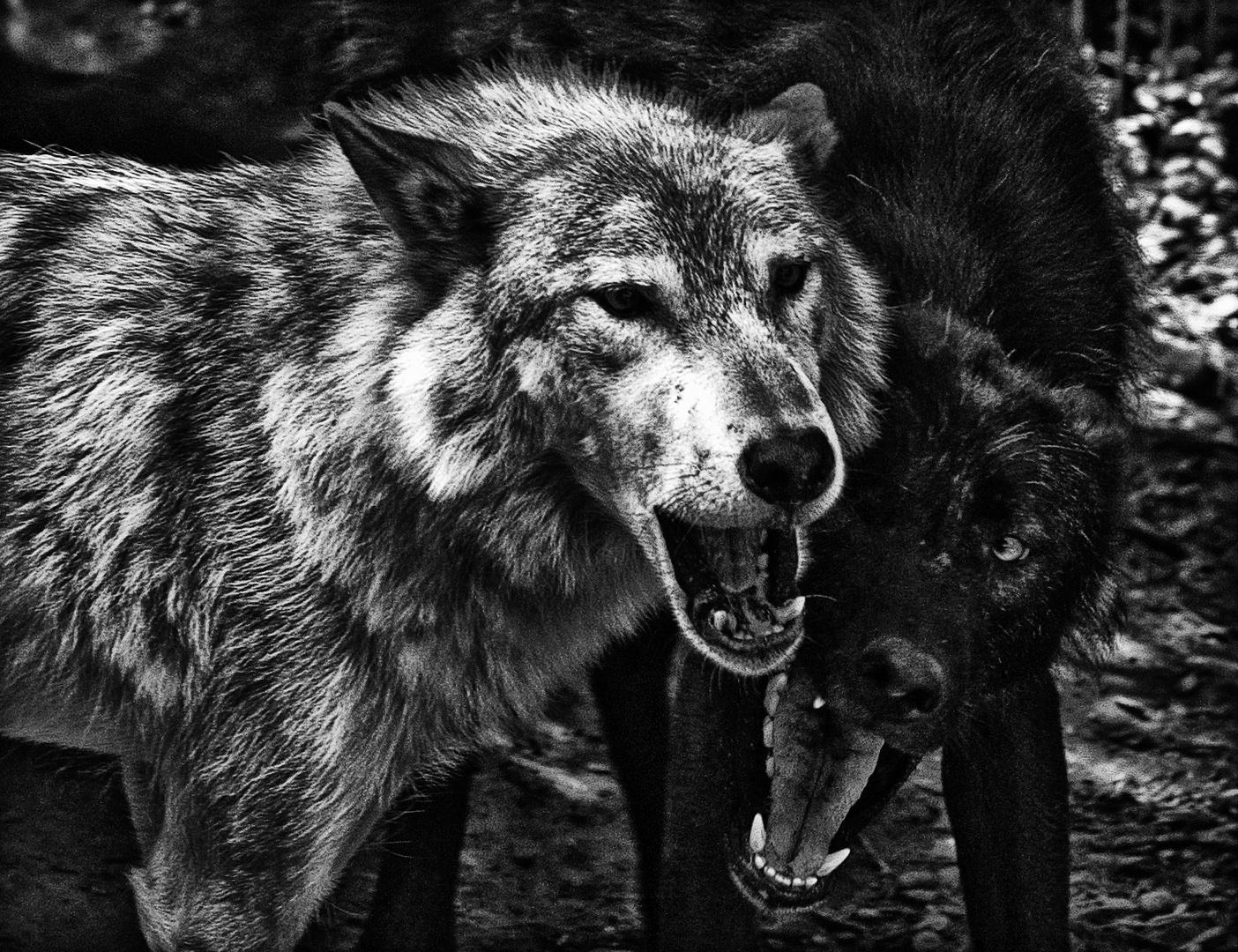 wolfsmäuler ...