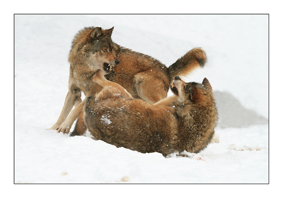 Wolfszoff