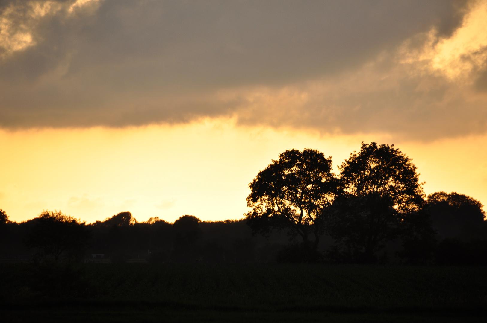 Wolken mit Bäumen