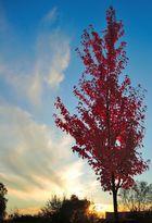 Wolken, Sonne, Herbstliche Bäume