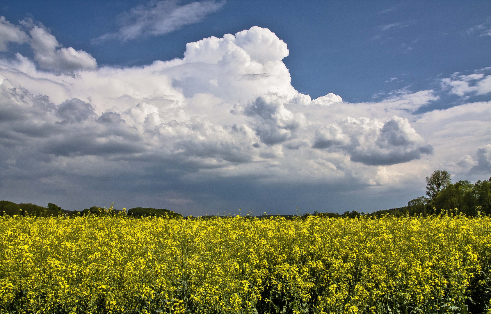 Wolken überm Rapsfeld....