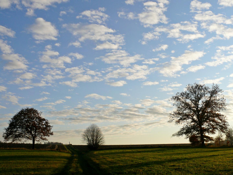Wolken und Bäume...