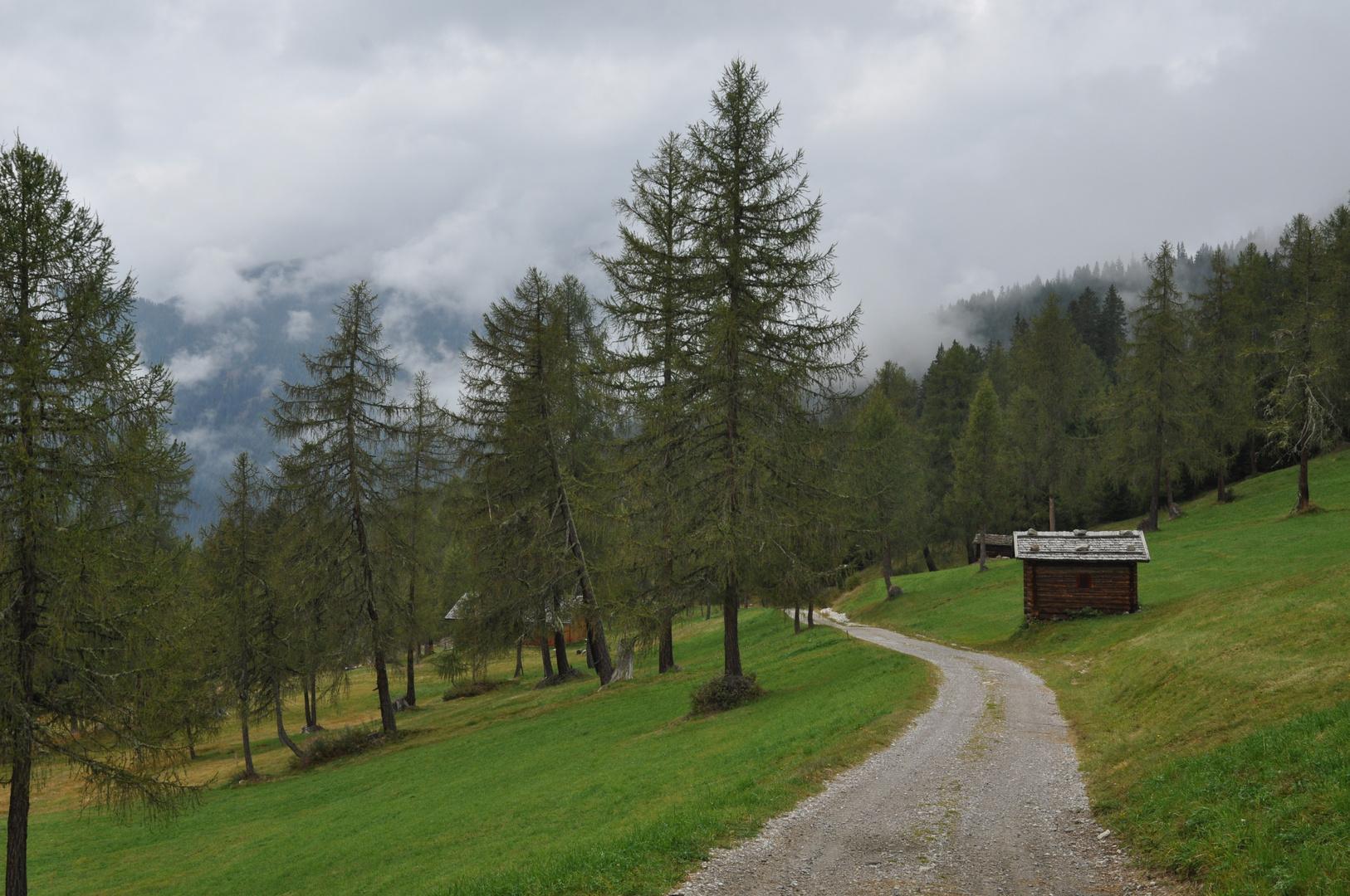 Wolkenfetzen hinter Bäumen