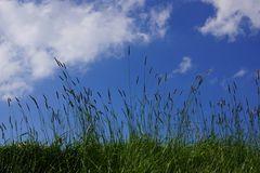 Wolkengras