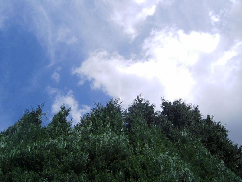 Wolkengucker