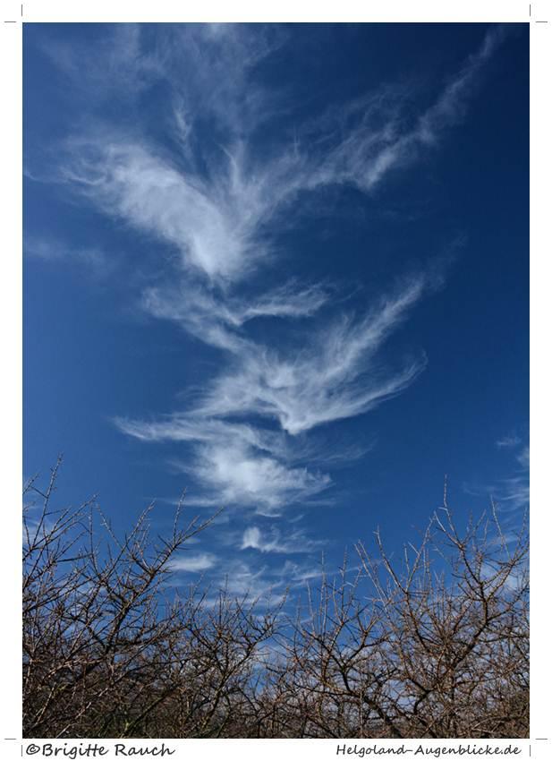 Wolkenmöwen