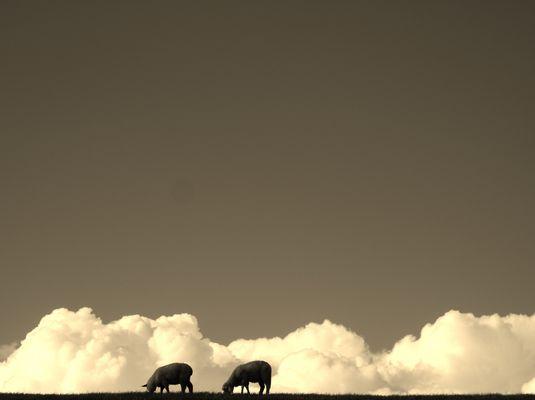 Wolkenschafe