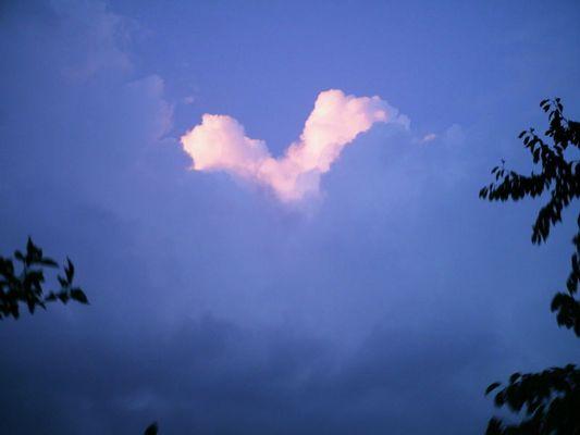 Wolkenvogel