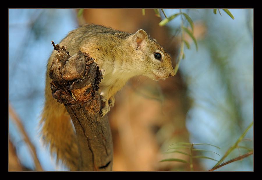 Wolle auch mal ein Hörnchen knipsen...