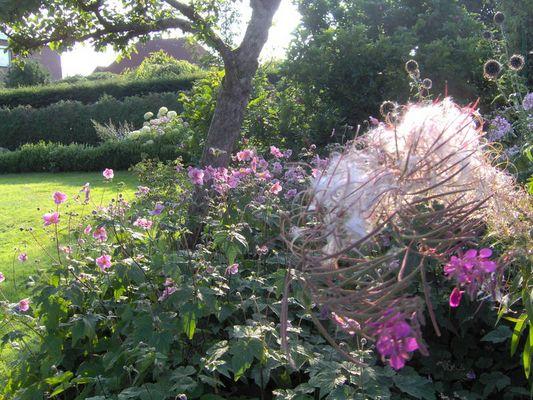 Wollige Blumen in der Sonne...