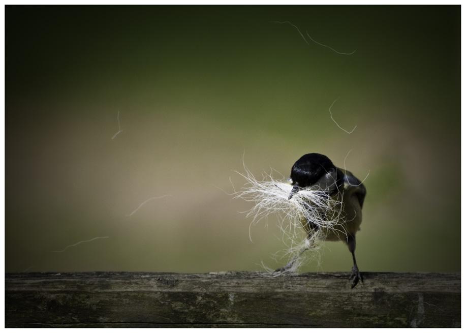 Wollte auch mal `nen Vogel hochladen.