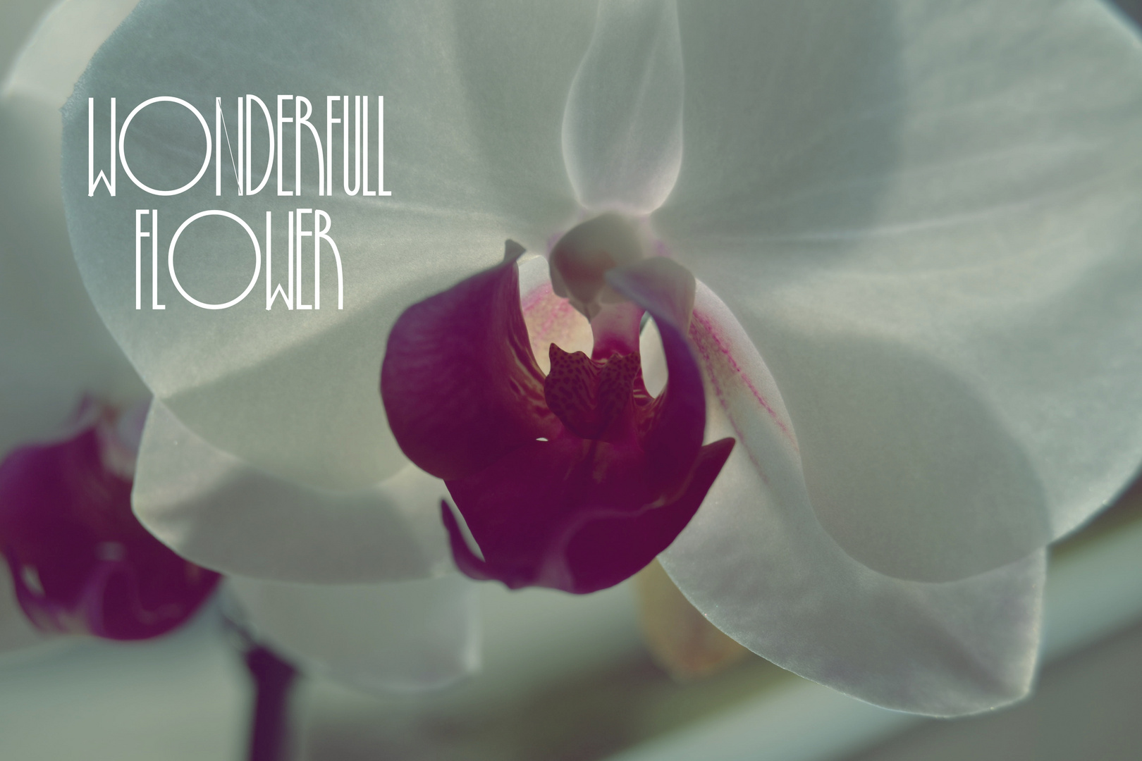 Wonderfull Flower