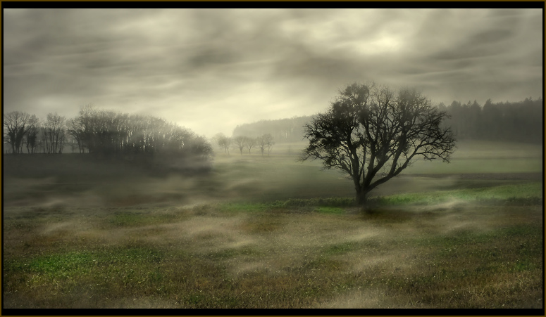 - wonderland -
