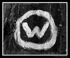 """""""Wood"""""""