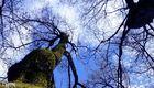 wood sky